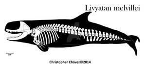 skeletal reconstruction Livyatan melvillei