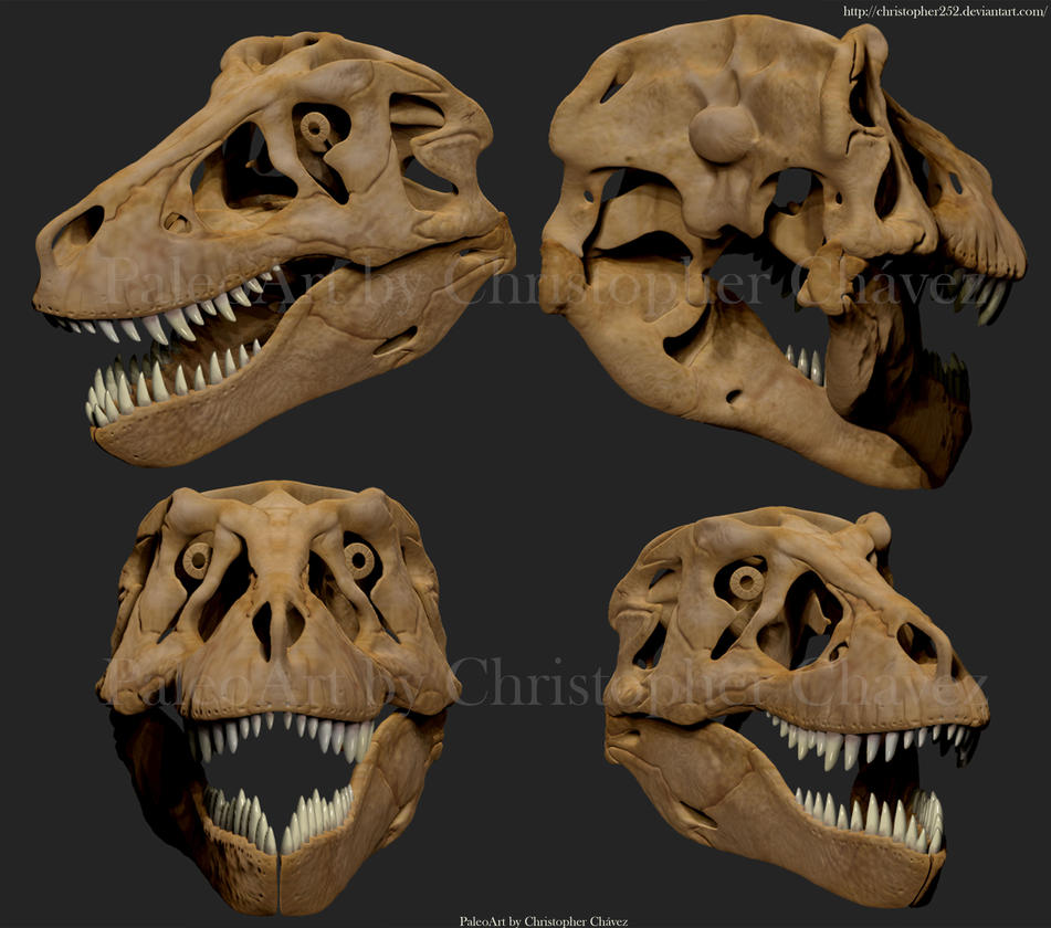 Image Result For Dinosaur Teeth Color