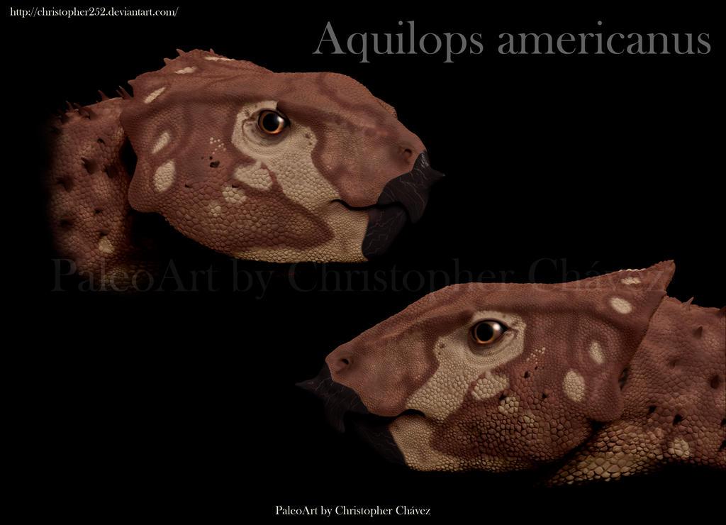 Aquilops americanus by Christopher252