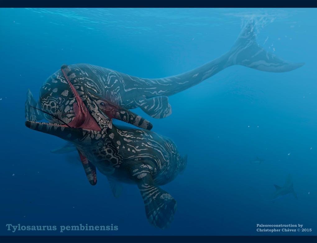 Tylosaurus pembinensis by Christopher252