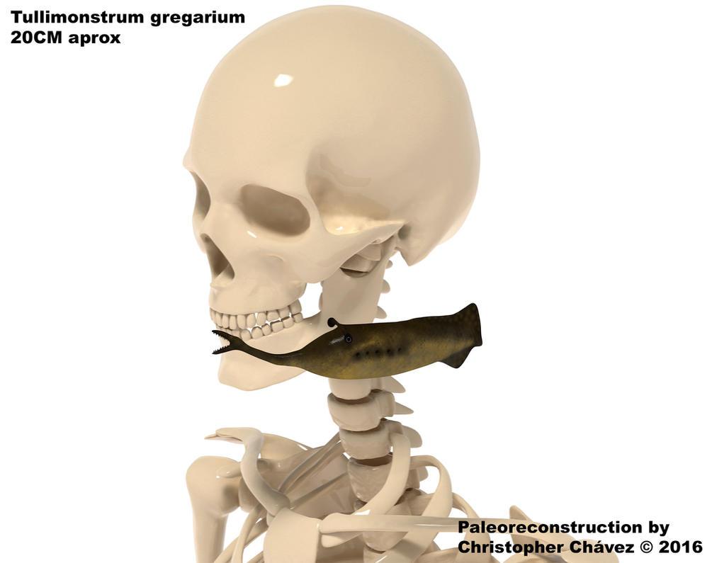 Tullimonstrum gregarium2 by Christopher252