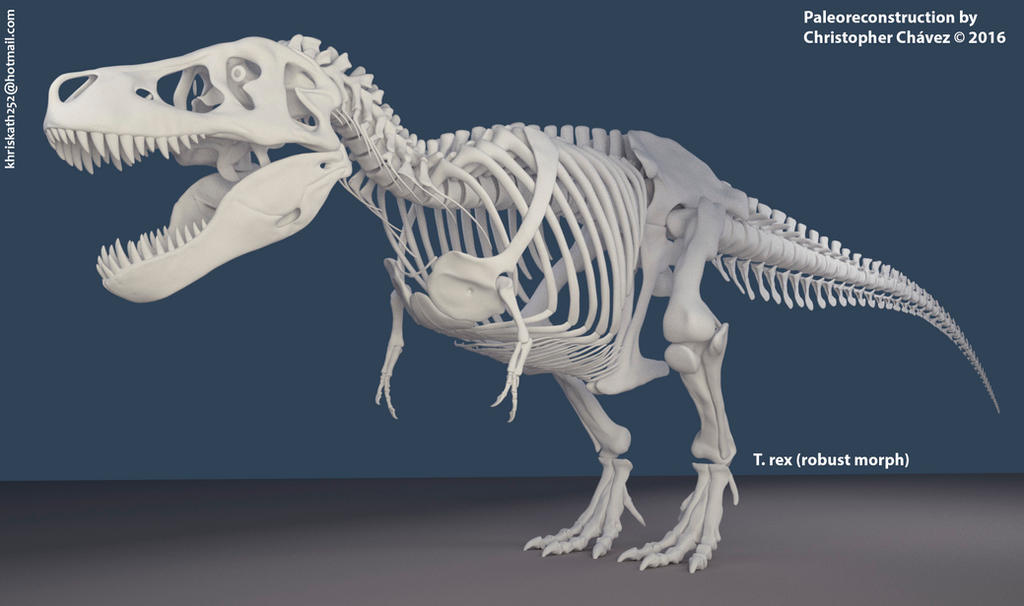 Skeleton T.rex (robust morph) by Christopher252