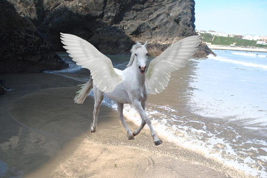 Real Flying Horse Images | www.pixshark.com - Images ...