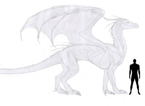 Dragon Reference sheet WIP