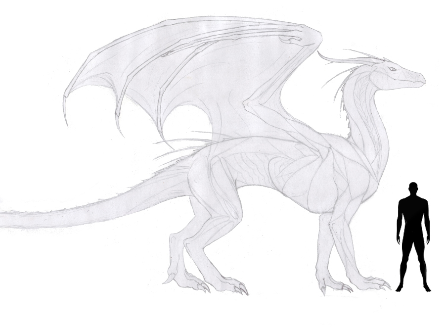 Line Art Dragon : Dragon reference sheet wip by anonymous on deviantart
