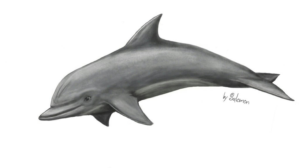 Tursiops truncatus by The-Fall-of-Snow