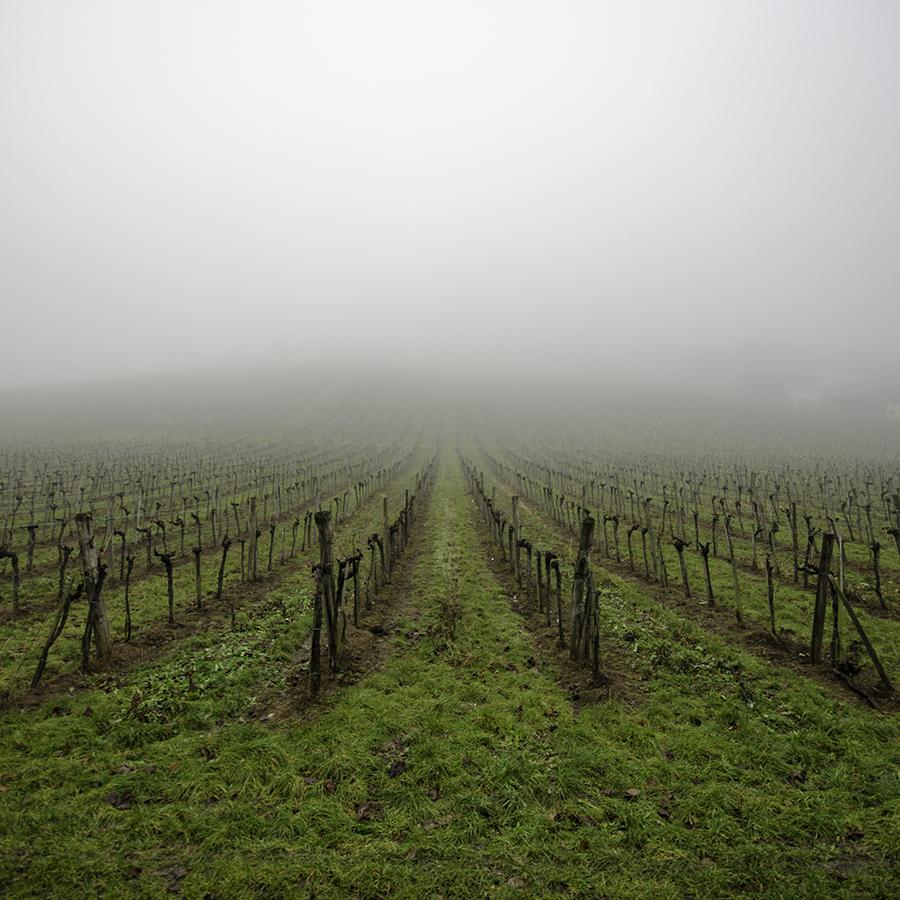 Into Fog by roarbinson