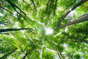 Foliage by roarbinson
