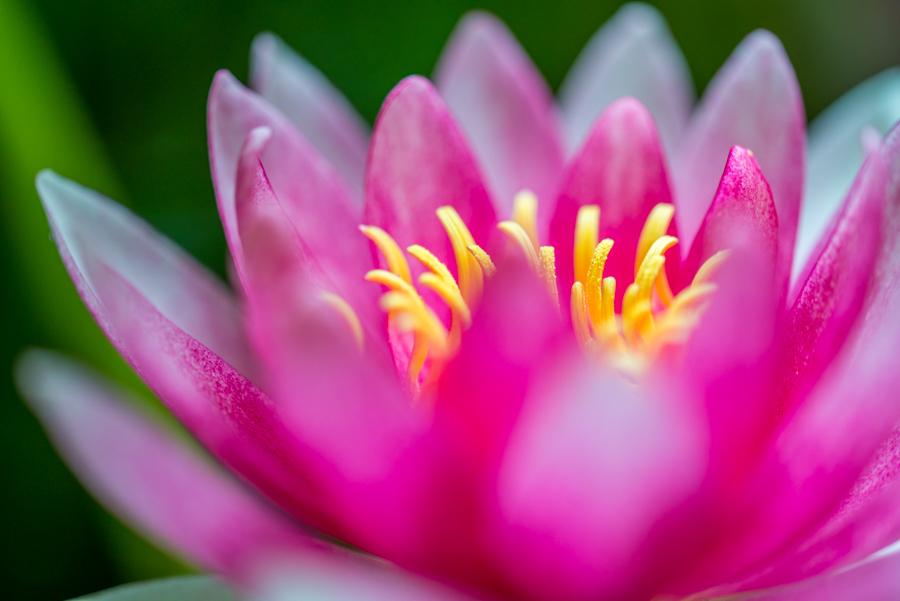Inner Peace by roarbinson