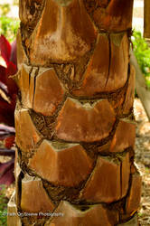 palm bark by dreamsborninfire