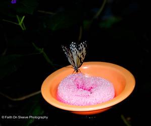 drink butterfly by dreamsborninfire