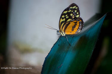 another fly..butterfly by dreamsborninfire