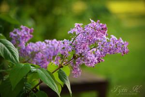 Purple by KnifeInToaster
