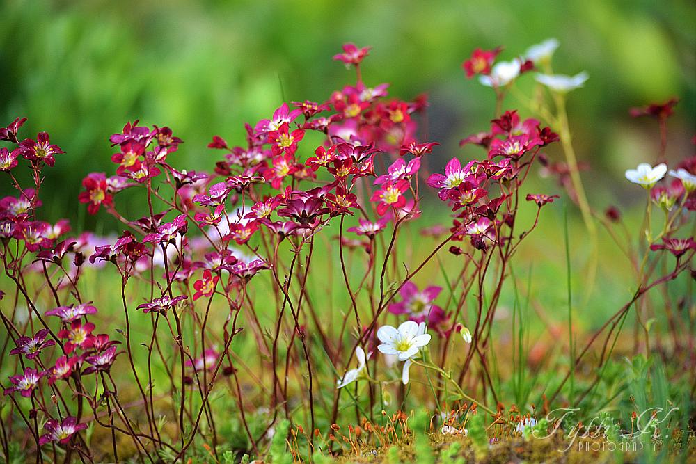Pretty Little Flowers by KnifeInToaster