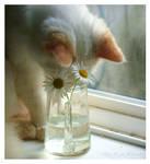 Curiosity