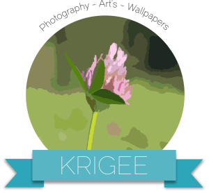 Krigee's Profile Picture