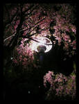 Cherry Light