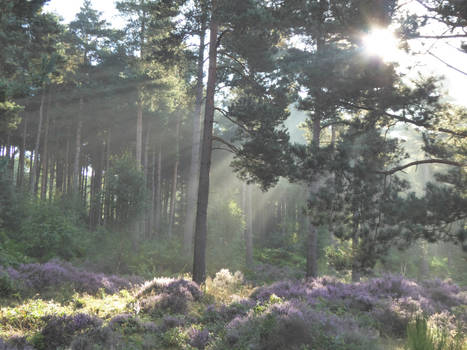 Through the trees, Sunlight