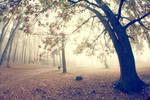 the morning fog 02