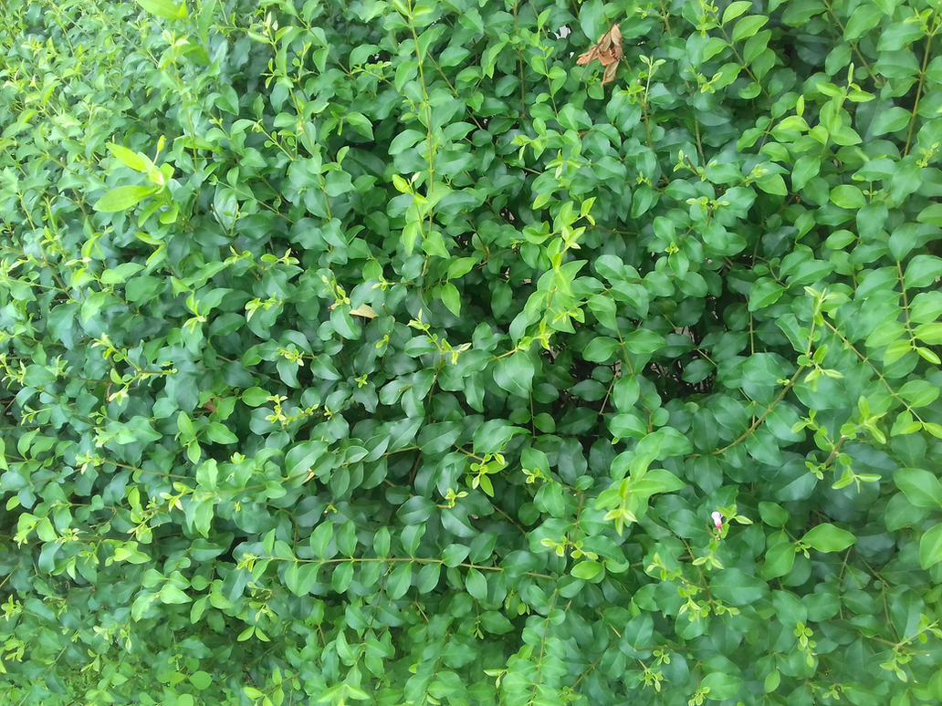 green plants 2 by phuongdonghylnct