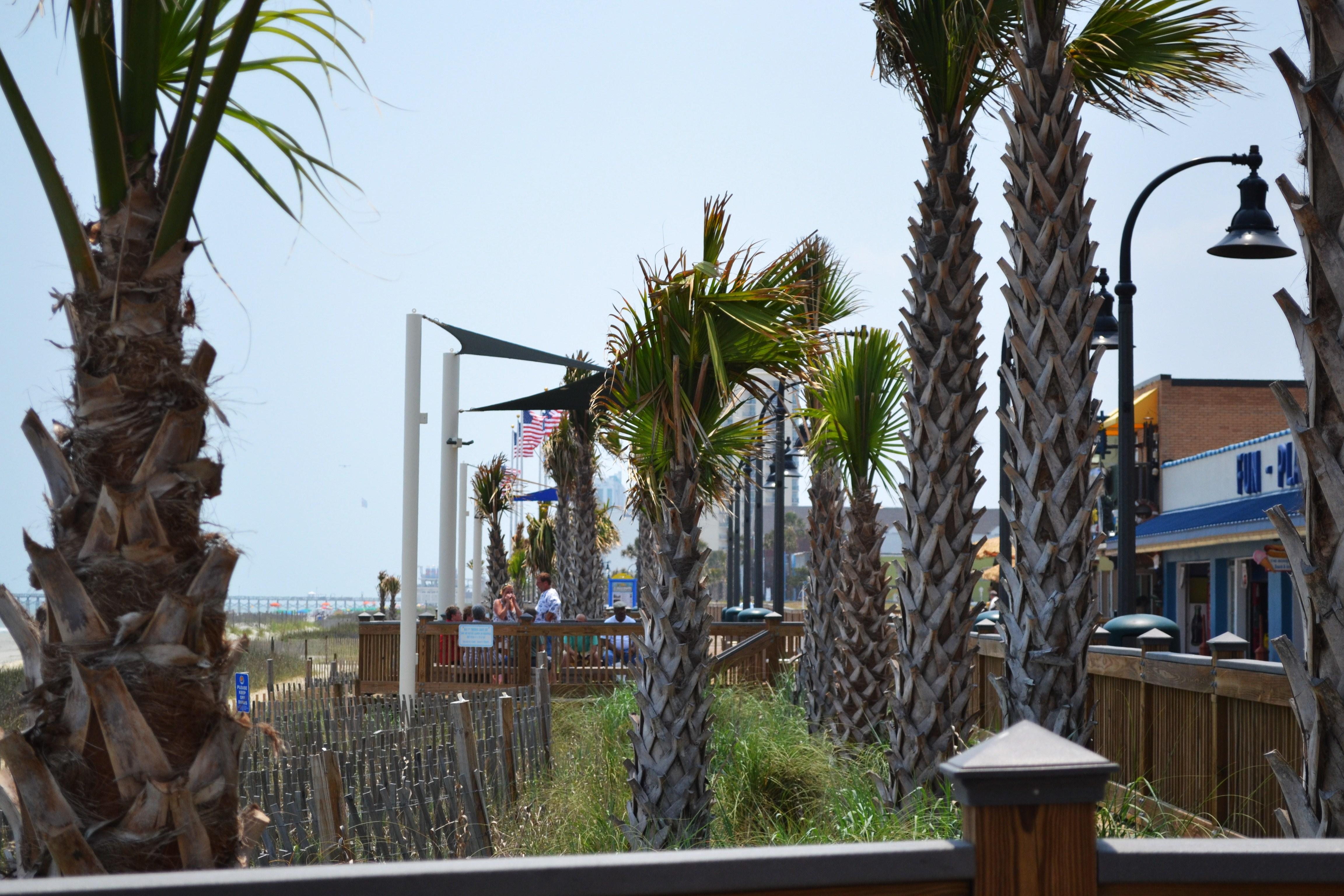 Myrtle Beach Palm Trees 2 By Mrschibi