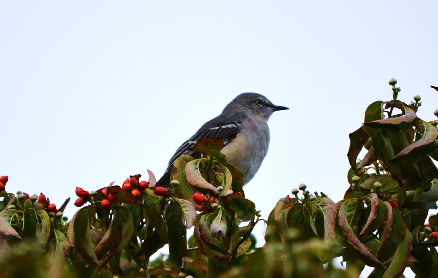 Day 23: Bird on top of tree by MrsChibi