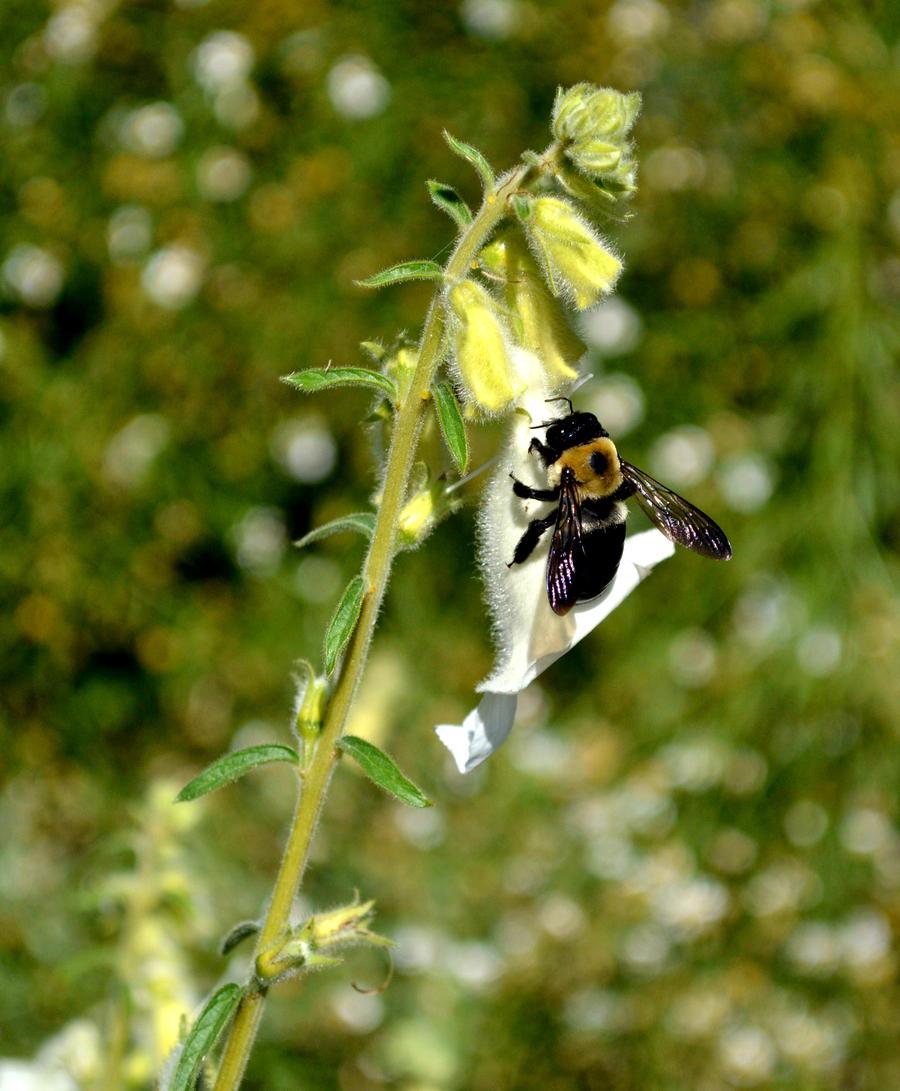 Day 29: Bumble Bee by MrsChibi