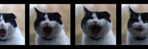 teh yawn