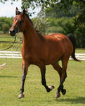 hovering trot