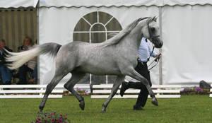 I'm a dressage horse