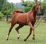 Another Stallion