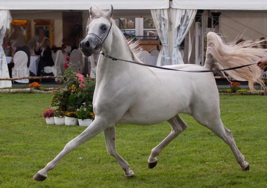 Ficha de Riley. Hold_your_horses_by_jello88-d4134gk