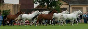 The Silver Herd III