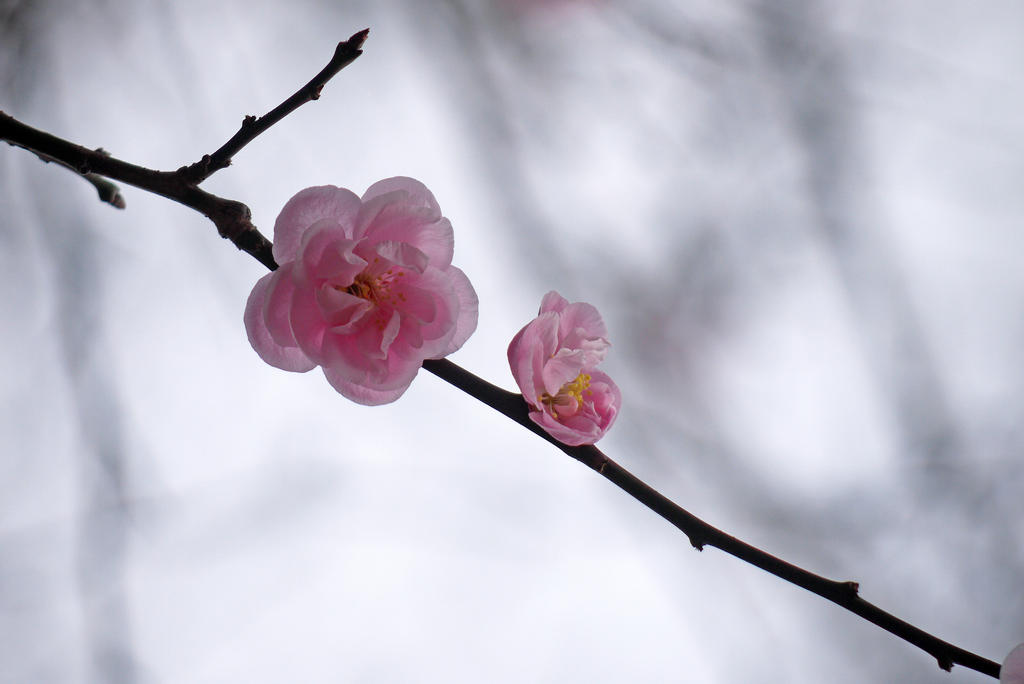 Beginning of Spring by kucingitem