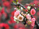 Spring Blossom 2 by kucingitem