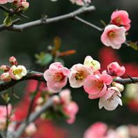 Spring Blossom 4 by kucingitem