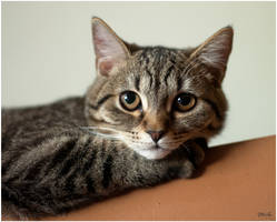 teeny cat by Andrey-A-M