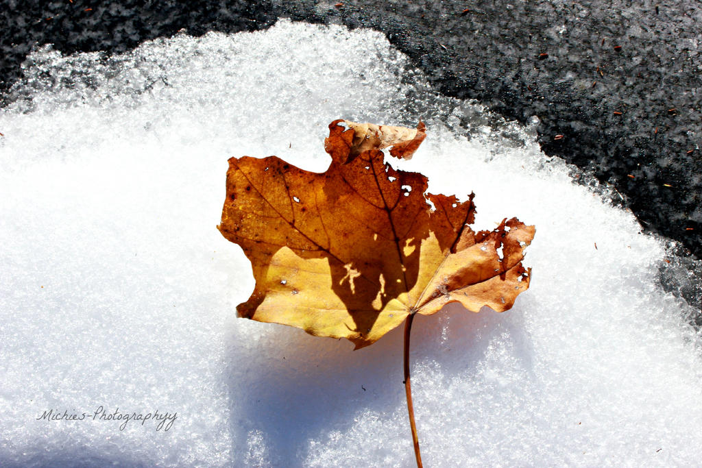 Crisp Leaf by Michies-Photographyy