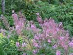Purple Wildflowers..
