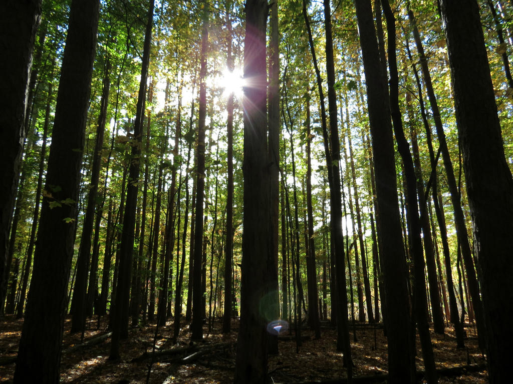 Shining Through the Trees by Michies-Photographyy