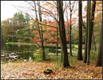Fall at the Pinecroft