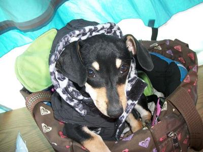 My dog NUNU photograph on sale on ebay by openInvent
