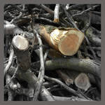 tree-rings. different universes by SatenkoDmitry