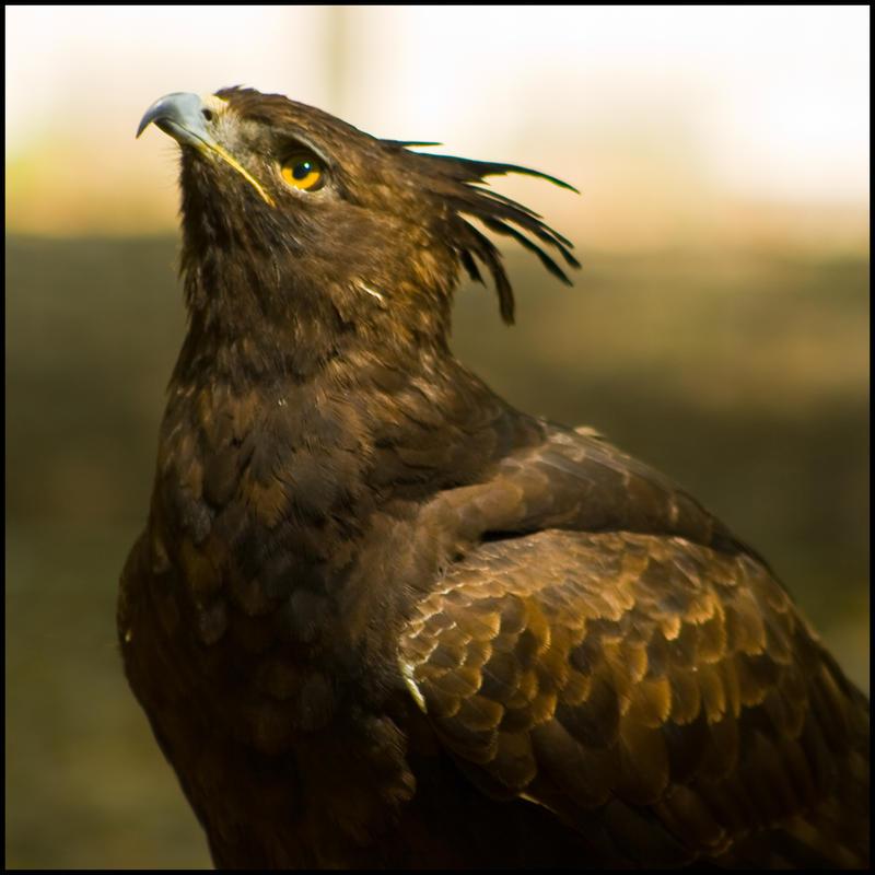 aves56 by redbeard31
