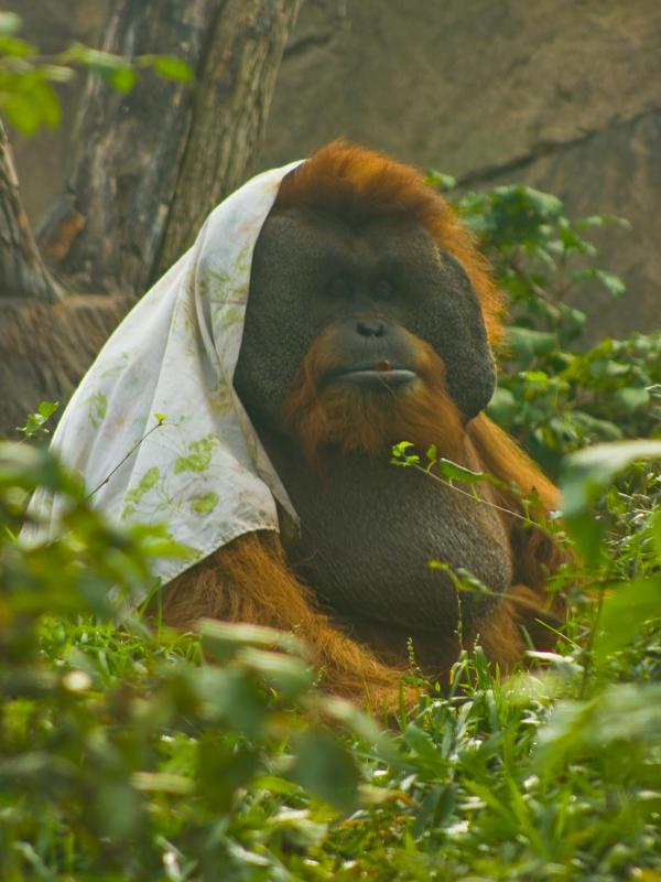 orang6 by redbeard31