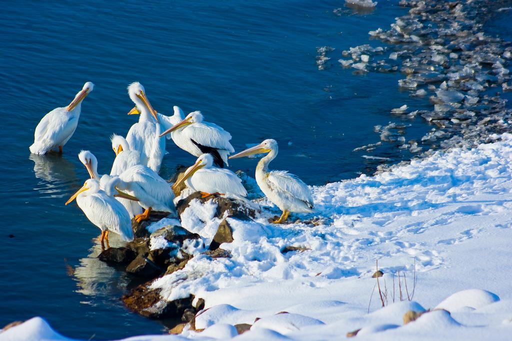 aves158 by redbeard31