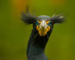 aves226 by redbeard31