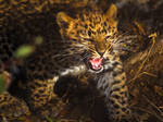 leopard284
