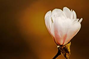 flower329 by redbeard31