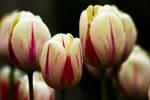 flower344